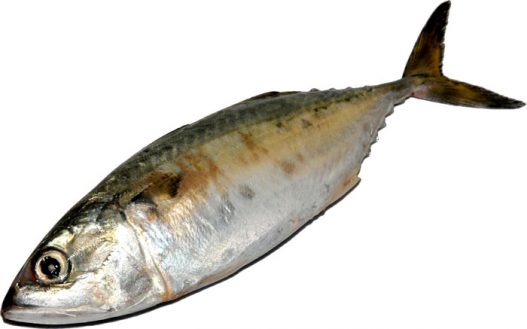 আইলা মাছ